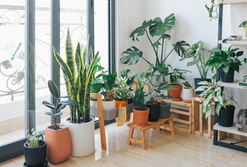 Inspiratie voor groen in je interieur